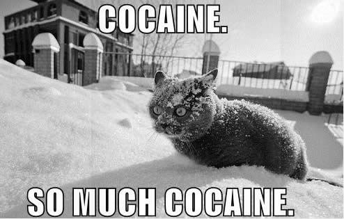 lolcat so much cocaine