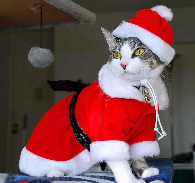 Le Papa Noël, c'est de la merde !