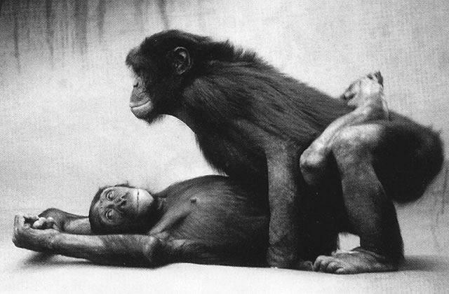 Bonobos VS Hommes : le comparatif