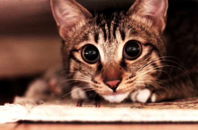 Les vidéos d'animaux de la semaine #12