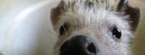 Les vidéos d'animaux de la semaine #19