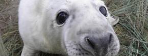 Les vidéos d'animaux de la semaine #22
