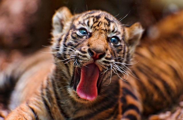 Les vidéos d'animaux de la semaine #23
