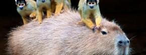 Les vidéos d'animaux de la semaine #24