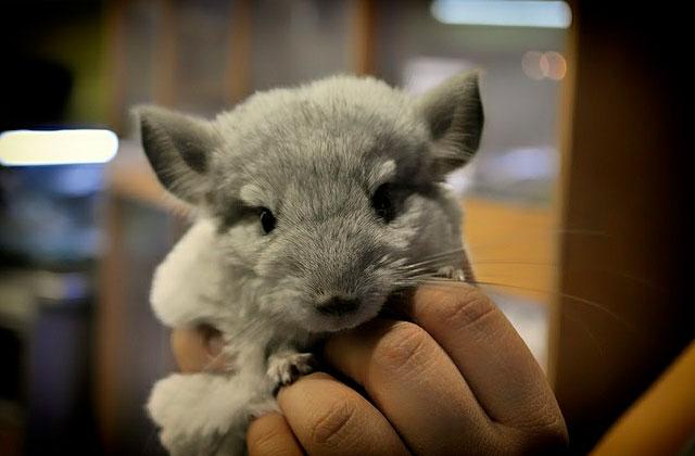 Les vidéos d'animaux de la semaine #33