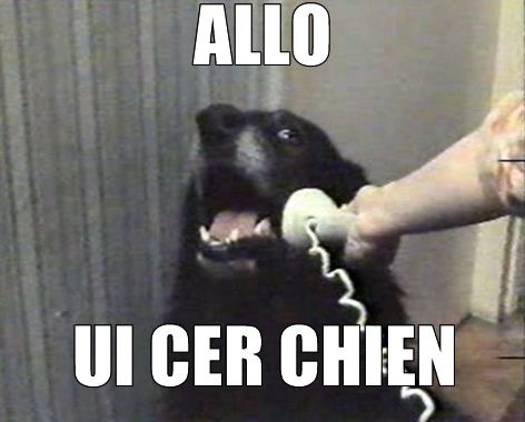 allouicerchien