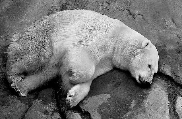 Les multiples enjeux de l'Arctique