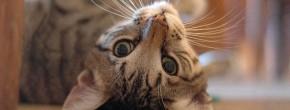 Les vidéos d'animaux de la semaine #34