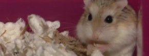 Le Cute Show : le refuge des hamsters