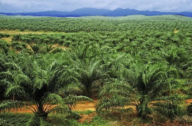 J'ai testé pour vous… arrêter l'huile de palme