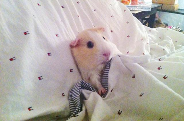 hamster sexuel sexe homo