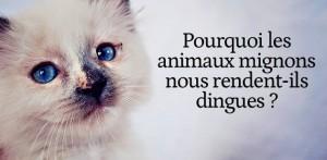 big-animaux-mignons-reactions