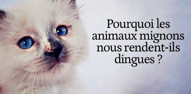 big-animaux-mignons-reactions