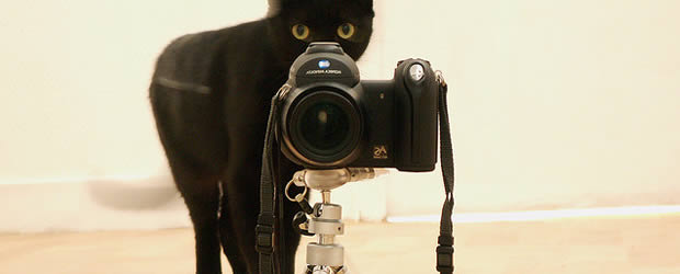 chat-photographe