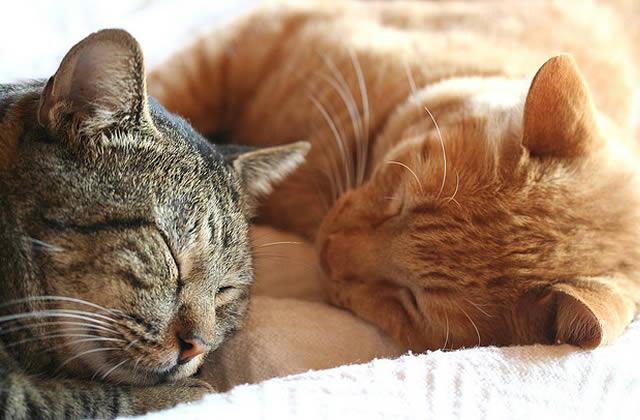 Je suis famille d'accueil pour chats, j'héberge les matous perdus ou abandonnés!