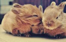 J'ai adopté un lapin, petite boule de bonheur sur pattes