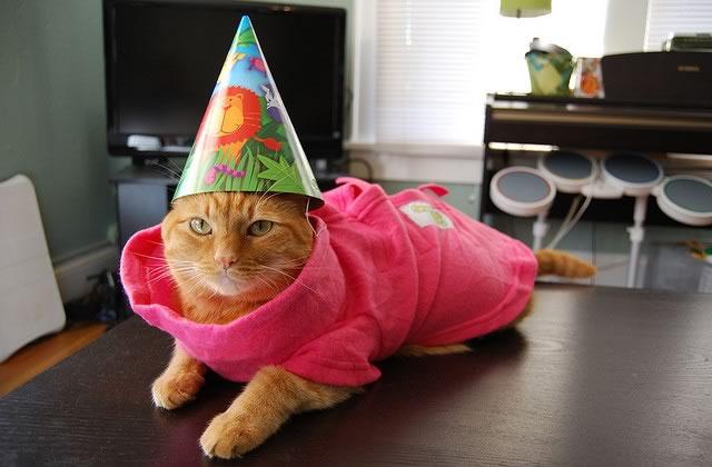 Huit ans ! Bon anniversaire madmoiZelle!