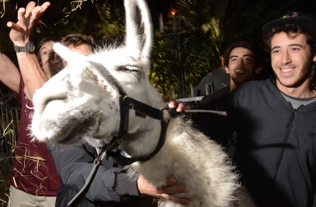 Quizz — Les animaux célèbres d'Internet