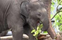 La première année d'un éléphant en 2 minutes