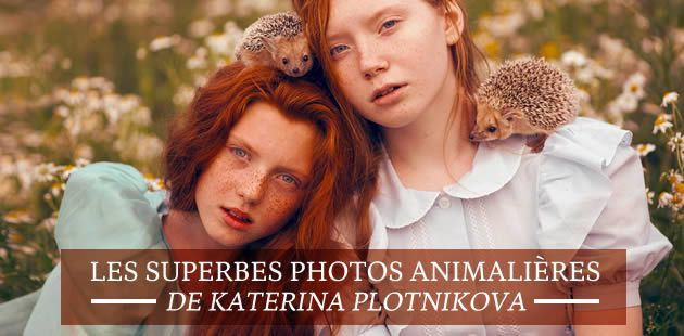 big-photos-animalieres-katerina-plotnikova