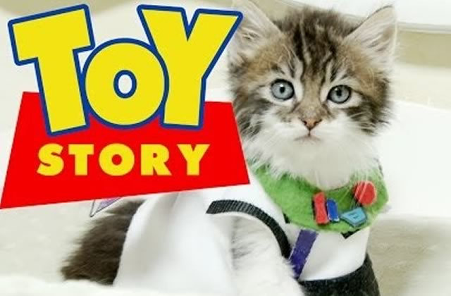 Toy Story version chatons : la mignonnerie absolue !