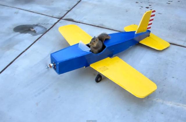 Un écureuil s'empare d'un avion de modélisme