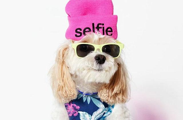 American Beagle, la nouvelle mode qui a du chien
