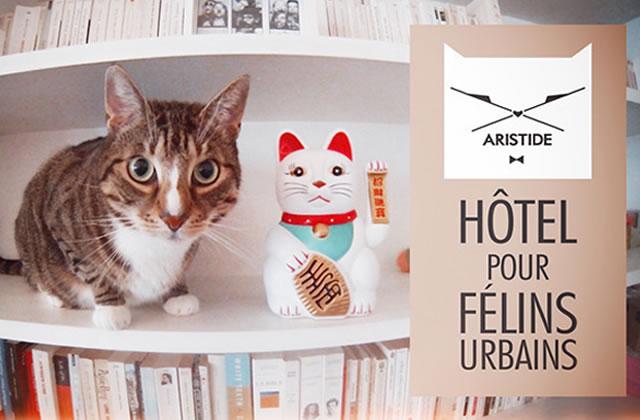Aristide, le premier hôtel pour chats, a ouvert ses portes !