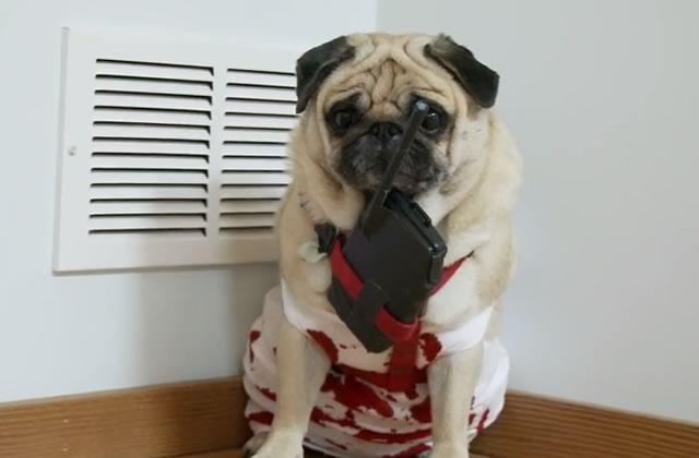 Die Hard joué par un chien (Carlin)