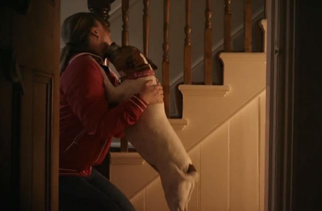 Unloved, la pub qui te fera adopter un chien