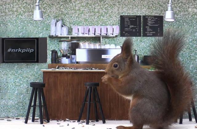 Le bar où les animaux viennent se servir eux-mêmes