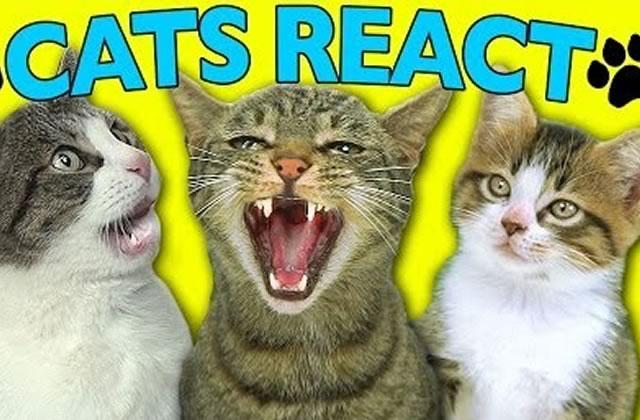 Des chats réagissent à des vidéos de chats