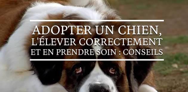big-chien-adoption-elevage-conseils