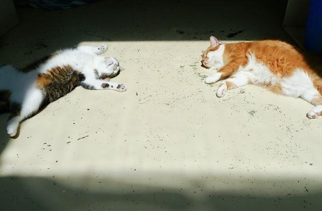Des chats défoncés à l'herbe à chat : la compilation
