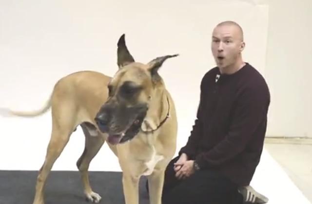 Comment les chiens réagissent-ils à l'aboiement humain ?