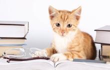 Les fans de chats sont les plus intelligents, c'est prouvé !