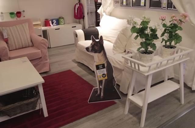 IKEA favorise l'adoption des chiens avec Home for Hope