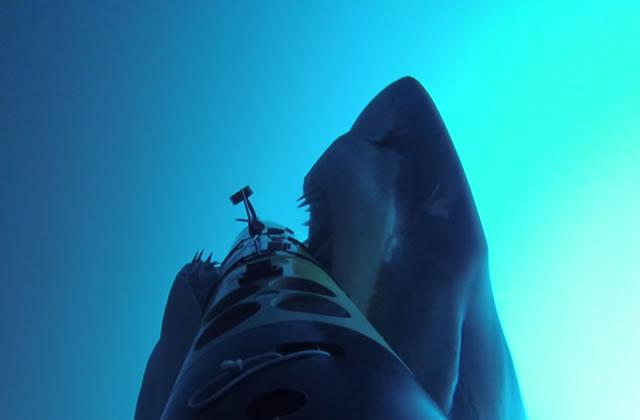 Une attaque de requin filmée au coeur de l'action
