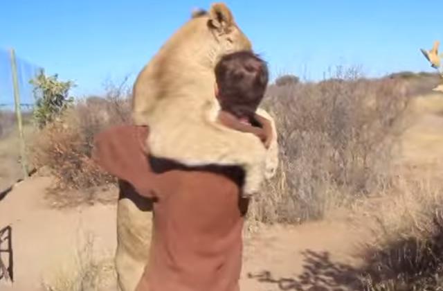 Le plus impressionnant des câlins d'animaux en vidéo