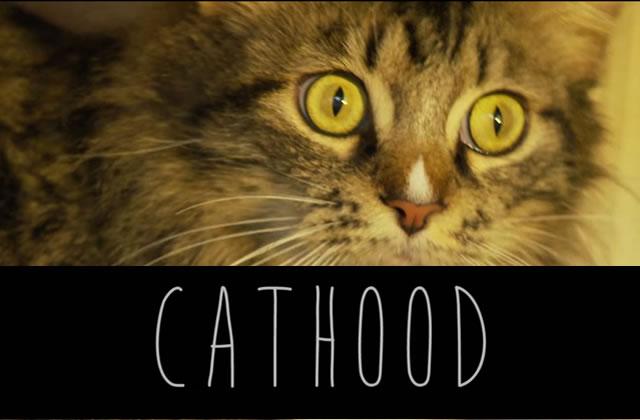 Cathood, la parodie de Boyhood version chatons
