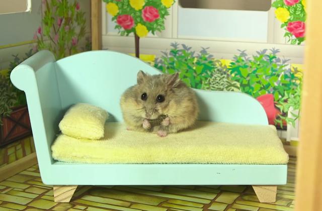 Un tout petit hamster dans une toute petite maison, le combo beaucoup trop chou