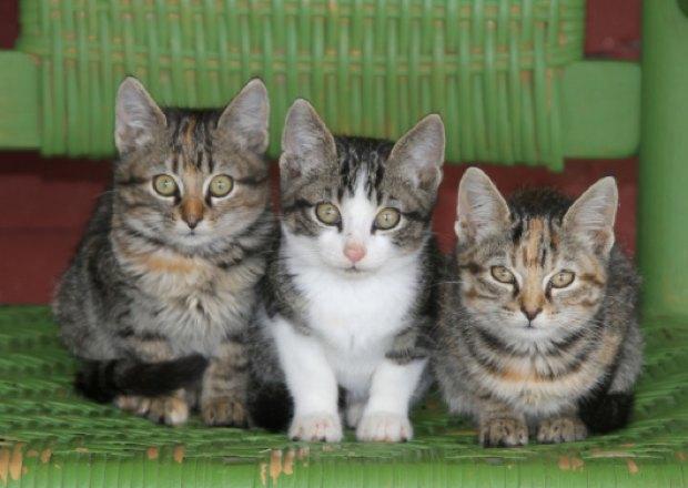 Josée l'Obsédée et les trois p'tits chats