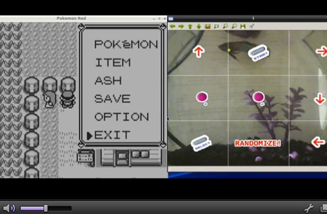 Un poisson joue à Pokémon en direct