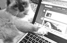 L'addiction à Internet, mythe ou réalité ?