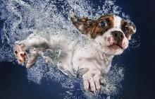 Des chiots sous l'eau dans Underwater Puppies !