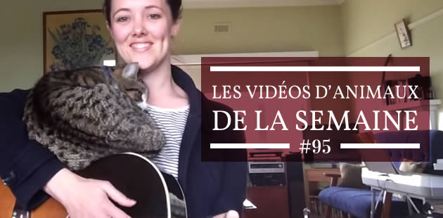 big-videos-animaux-95
