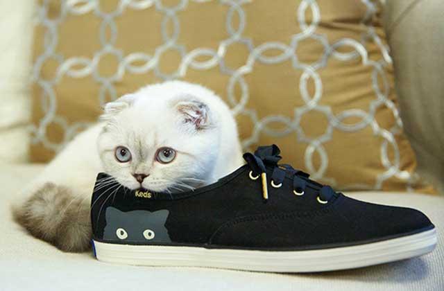 Taylor Swift dessine les « Sneaky Cats » pour la marque Keds