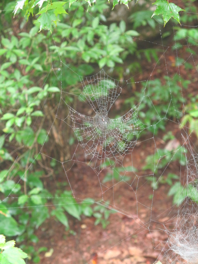 spidey_monts-Huangshan-Chine_laura