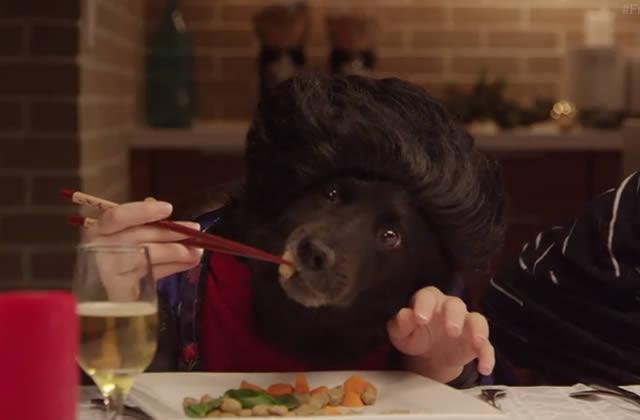 Des animaux qui mangent comme des humains en vidéo