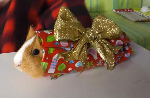 Test — Quel paquet cadeau es-tu?